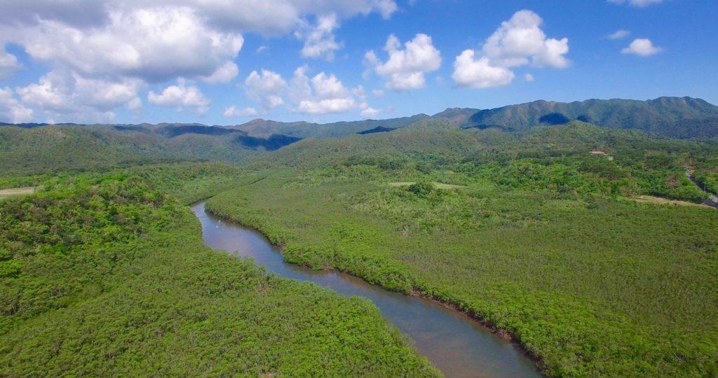 iriomote-mangrove