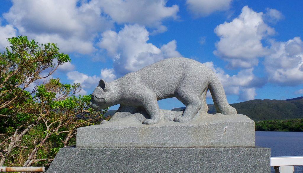 Iriomote wild cat yamaneko