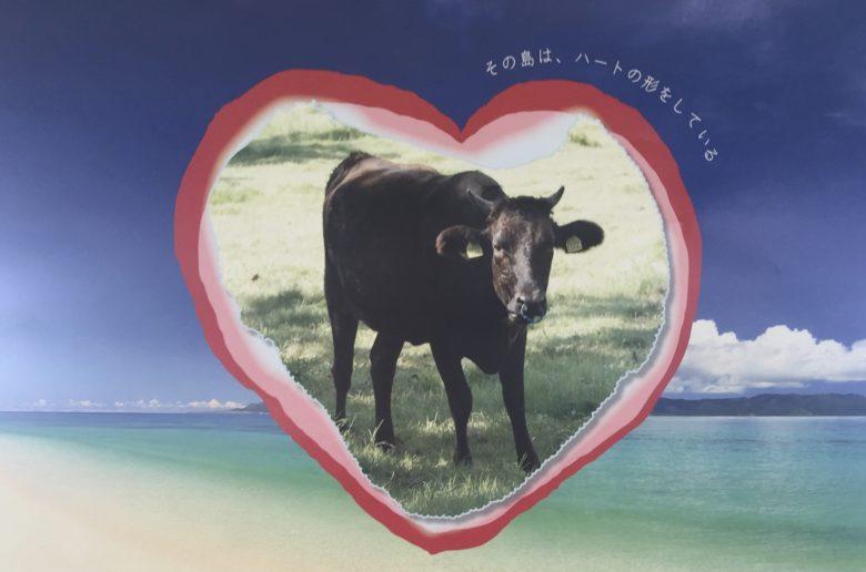kuroshima cow festival